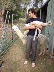 Quintero alpacas newest and first Suri