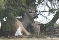 Deery and Softy