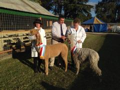 Bathurst Royal Show Supreme Champions